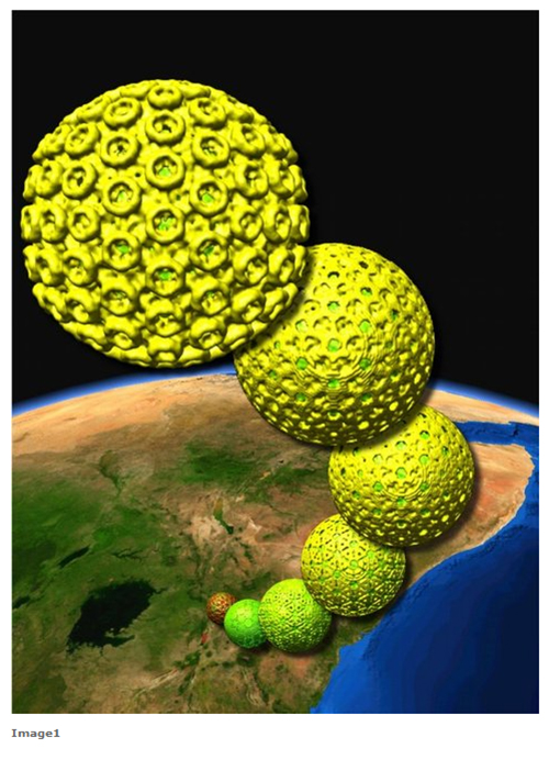 Yellow virus on earth